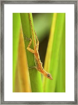 Central America, Costa Rica Framed Print by Jaynes Gallery