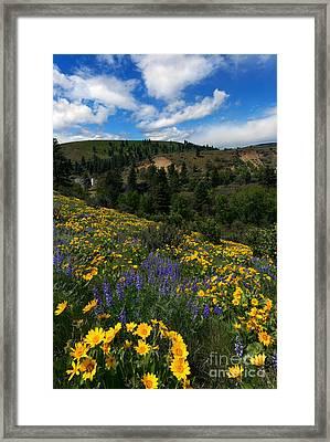 Central Washington Spring Framed Print by Mike Dawson