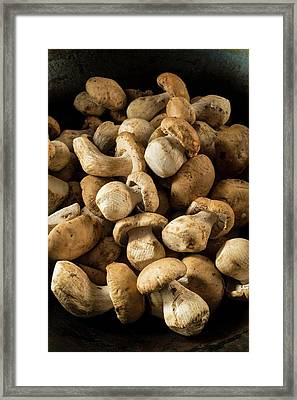 Ceps Mushrooms Framed Print by Aberration Films Ltd