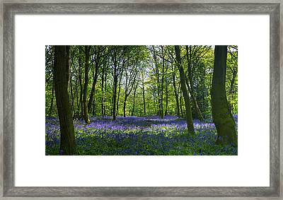 Chalet Wood Wanstead Park Bluebells Framed Print by David French
