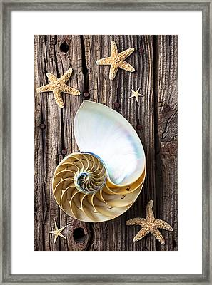 Chambered Nautilus  Framed Print by Garry Gay
