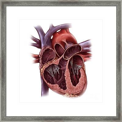Chambers Of The Heart Framed Print