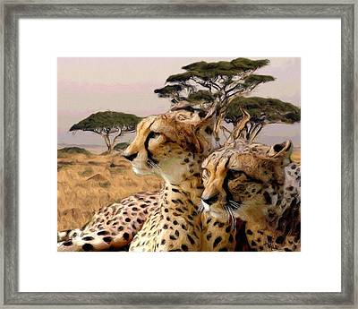 Cheetah Brothers Framed Print by Roger D Hale