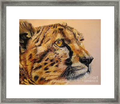 Cheetah Gaze Framed Print by Ann Marie Chaffin