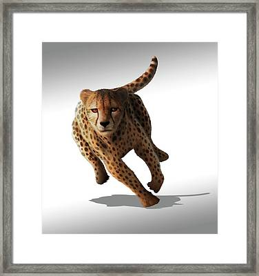 Cheetah Framed Print by Mark Garlick