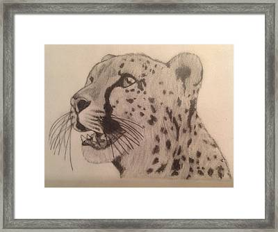 Cheetah Framed Print by Noah Burdett