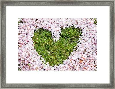 Cherry Blossom Shaped As A Heart Framed Print by Ashley Cooper