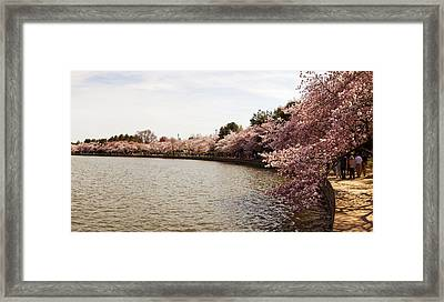 Cherry Blossom Trees At Tidal Basin Framed Print by Panoramic Images