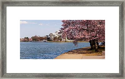 Cherry Blossom Trees In The Tidal Basin Framed Print by Panoramic Images