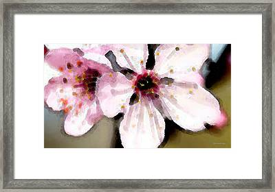 Cherry Blossoms By Sharon Cummings Framed Print by William Patrick