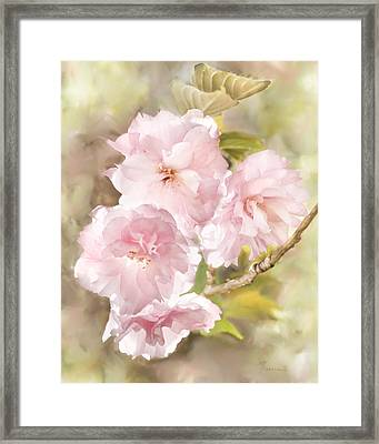 Cherry Blossoms Framed Print by Francesa Miller