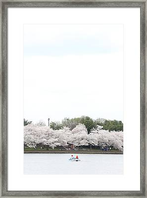 Cherry Blossoms - Washington Dc - 011310 Framed Print
