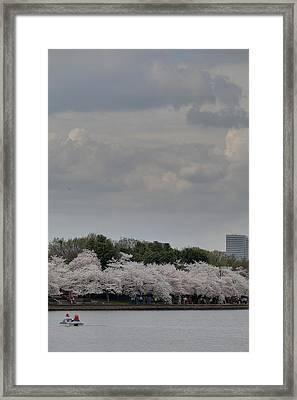 Cherry Blossoms - Washington Dc - 011311 Framed Print by DC Photographer