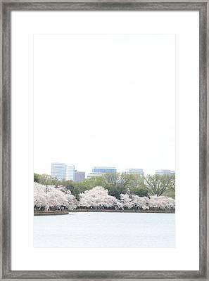 Cherry Blossoms - Washington Dc - 011316 Framed Print by DC Photographer