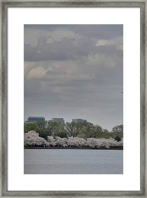 Cherry Blossoms - Washington Dc - 011317 Framed Print