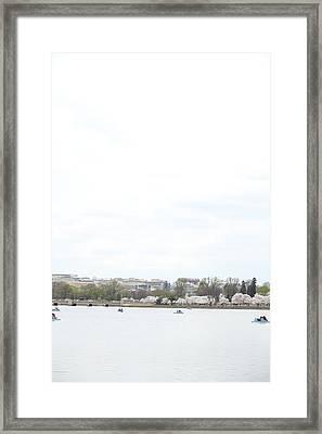 Cherry Blossoms - Washington Dc - 01133 Framed Print