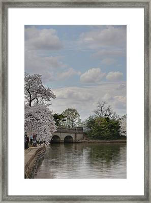Cherry Blossoms - Washington Dc - 011330 Framed Print by DC Photographer