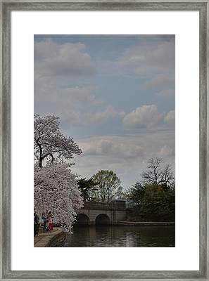 Cherry Blossoms - Washington Dc - 011331 Framed Print