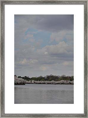 Cherry Blossoms - Washington Dc - 011333 Framed Print by DC Photographer