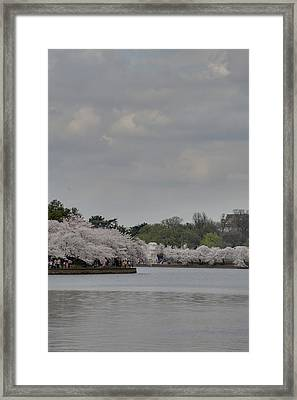 Cherry Blossoms - Washington Dc - 011335 Framed Print
