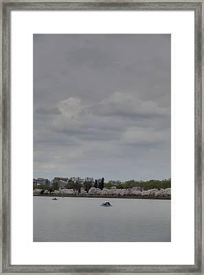Cherry Blossoms - Washington Dc - 01134 Framed Print