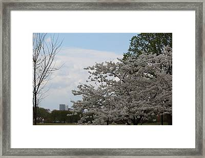 Cherry Blossoms - Washington Dc - 011345 Framed Print by DC Photographer