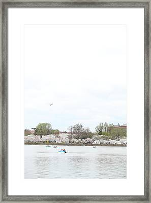 Cherry Blossoms - Washington Dc - 01136 Framed Print by DC Photographer