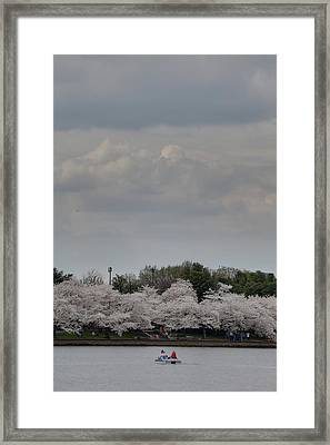 Cherry Blossoms - Washington Dc - 01139 Framed Print by DC Photographer