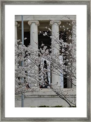 Cherry Blossoms With Jefferson Memorial - Washington Dc - 01131 Framed Print by DC Photographer