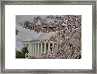 Cherry Blossoms With Jefferson Memorial - Washington Dc - 01134 Framed Print by DC Photographer