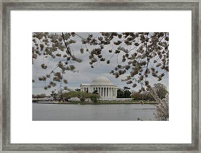 Cherry Blossoms With Jefferson Memorial - Washington Dc - 01137 Framed Print by DC Photographer