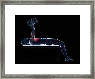 Chest Muscles Of A Weightlifter Framed Print by Sebastian Kaulitzki