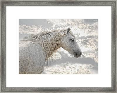 cheval de la Camargue Framed Print by Joachim G Pinkawa