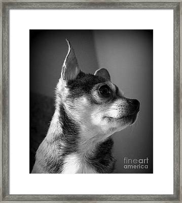 Chihuahua Framed Print by Michelle Wolff
