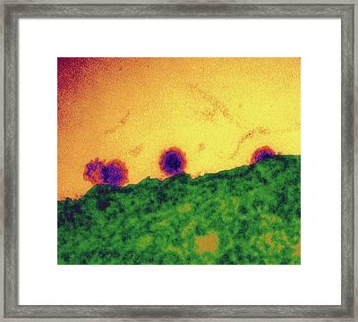 Chikungunya Virus Particles Budding Framed Print by Dr Klaus Boller