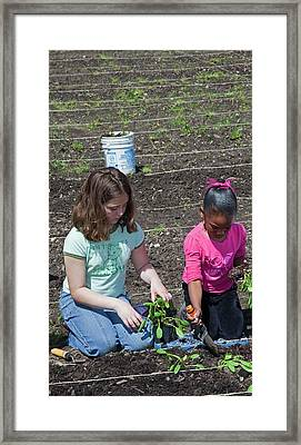 Children At Work In A Community Garden Framed Print by Jim West