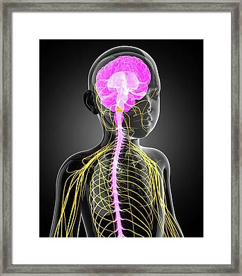 Child's Central Nervous System Framed Print by Pixologicstudio