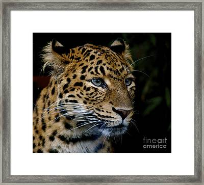 Chinese Panther Framed Print