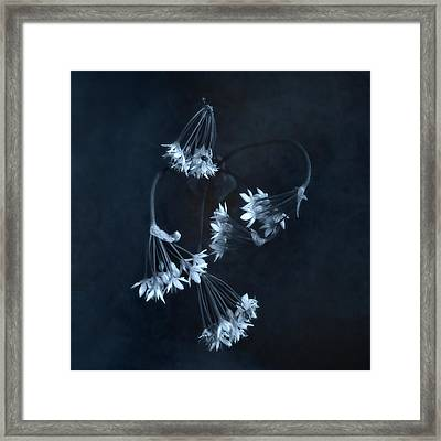 Framed Print featuring the photograph Chive Blossoms by Louise Kumpf