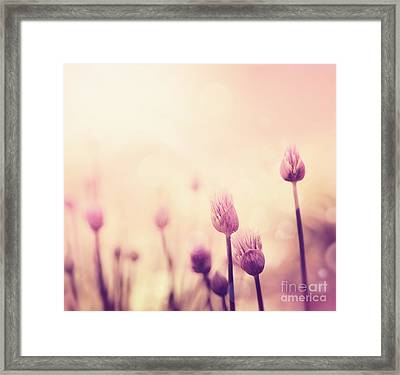Chives Flowers Framed Print by Mythja  Photography