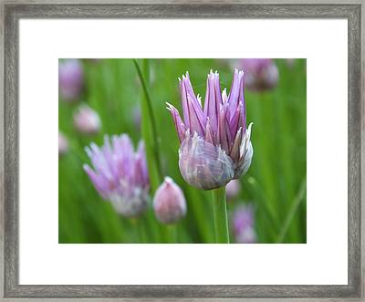 Framed Print featuring the photograph Chives by Gene Cyr