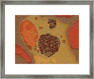 Chlamydia Bacteria In A Lung Cell Framed Print
