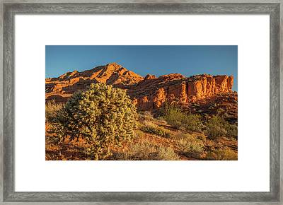 Cholla Cactus And Red Rocks At Sunrise Framed Print