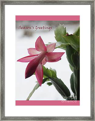 Christmas Cactus Season's Greeting Card   #1   Framed Print