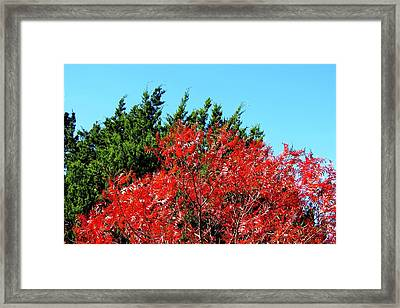 Framed Print featuring the photograph Christmas Color by David  Norman