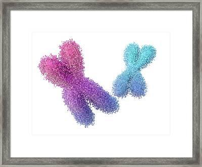 Chromosomes Framed Print