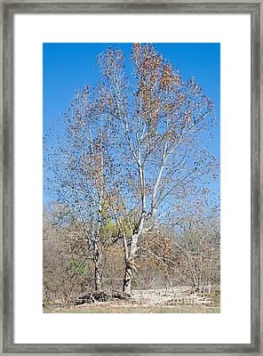 Cibolo Creek Framed Print by Gary Richards