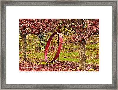 Circle Of Life Framed Print