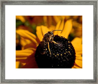 Circling Framed Print by Rona Black