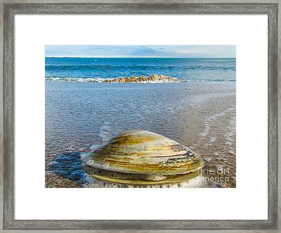 Clam's Point Of View Framed Print by Joe Faragalli